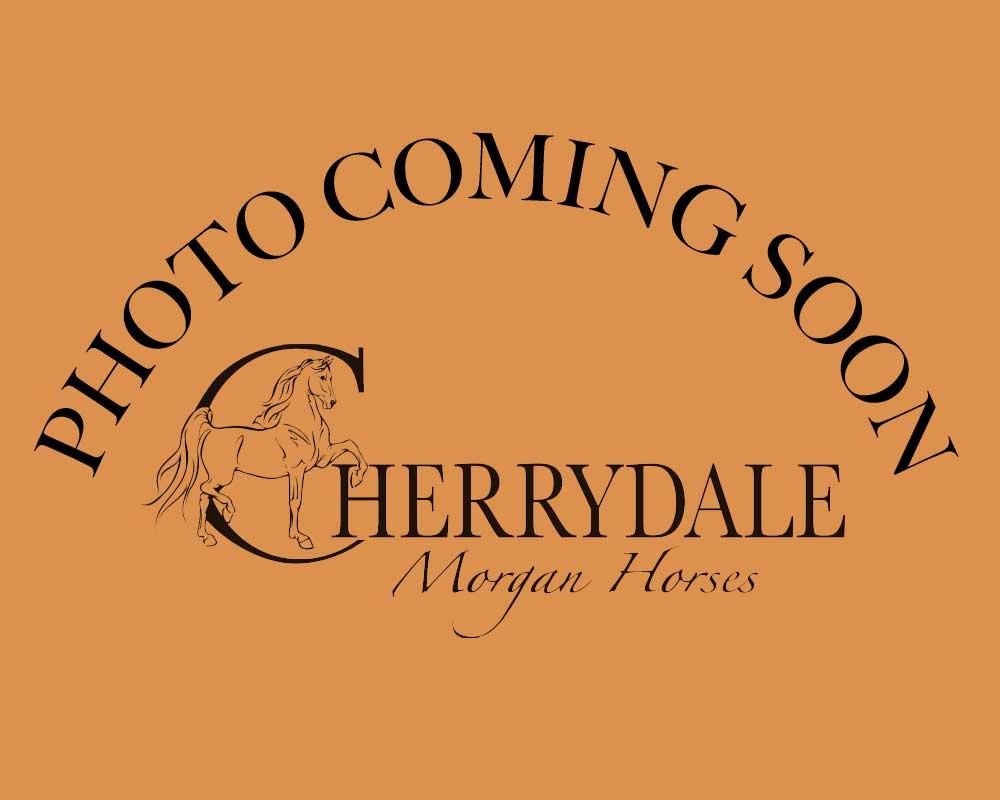 Cherrydale Chardonnay